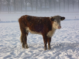 Winter februari 2010